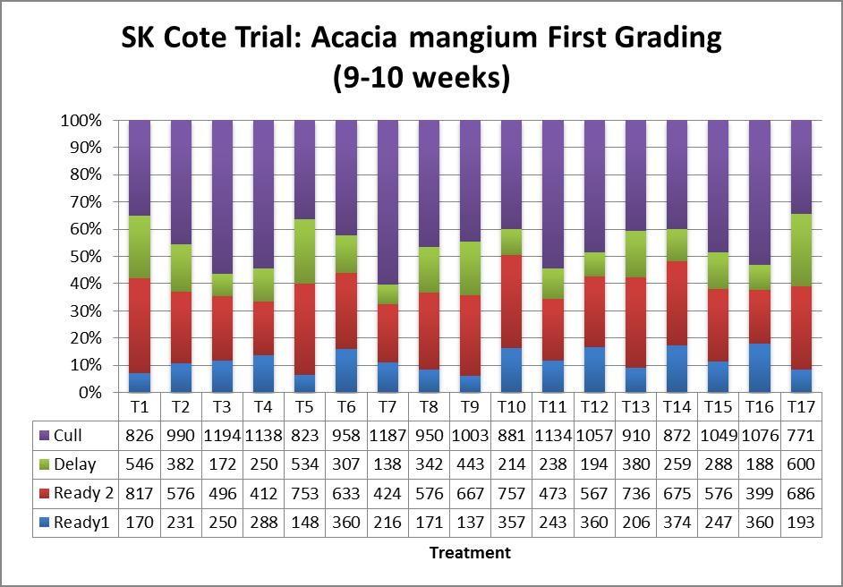 SK Cote Trial Acacia Mangium First Grading