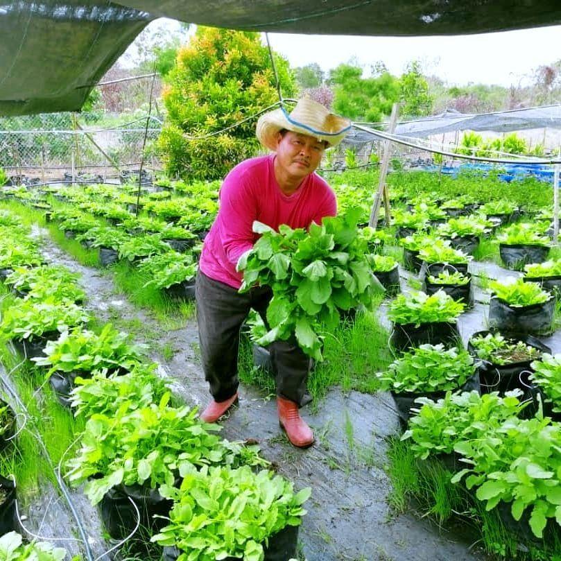 Customer Testimonial- Vegetable Farmer.