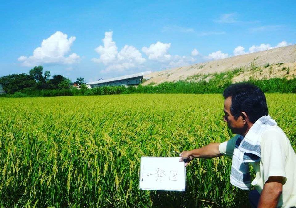 Japan, Trial Data Wet Field Paddy