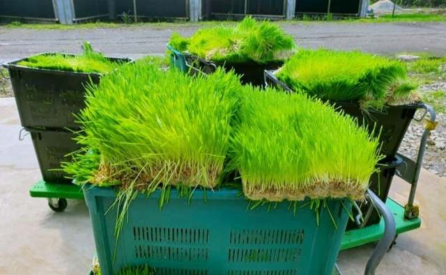 SK Specialties Planting