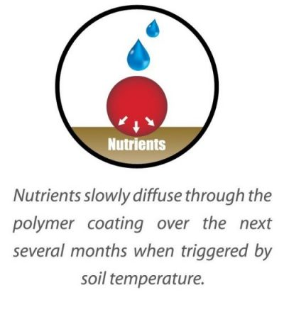 Nutrient Diffuse Slowly